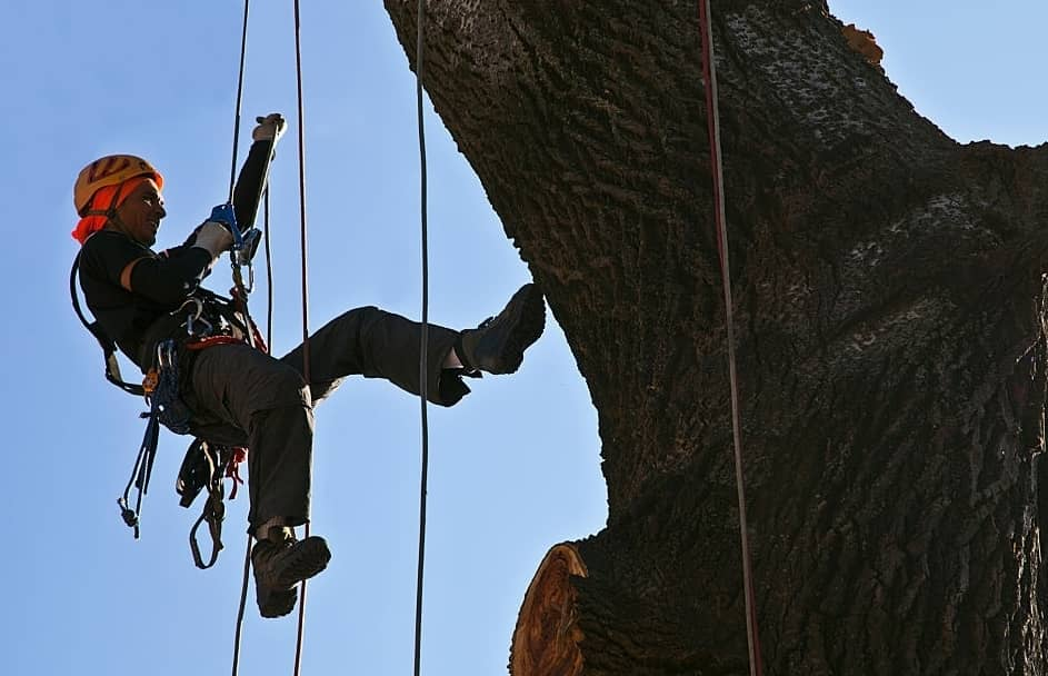 How To Choose An Arborist