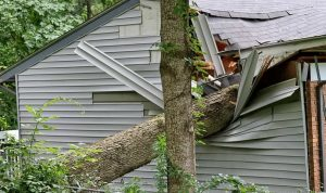 How To Find If Your Trees Are At Risk Of Falling