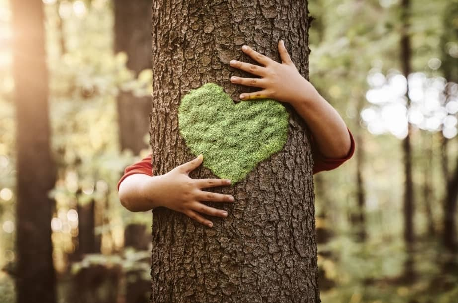 How To Safeguard Young Trees From Wind Damage